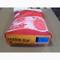 Семена подсолнечника Лимагрейн 5555 Лг Оригинал LG 2019 Limagrain ЛГ5555