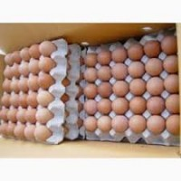 Продам яйцо куриное столовое по всей Украине