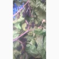 Продам тутовник кору корни веточки (шелковица черная)