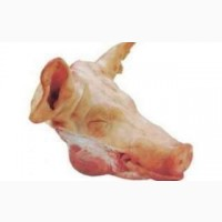 Голова свинна з языком