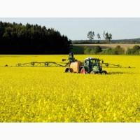 Купуємо ріпак ГМО та ні ГМО