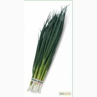 Семена лука на перо VULCAN / ВУЛКАН от Китано