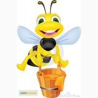 Закупаем мед оптом, самовывоз