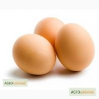 Яйцо куриное, оптом и в розницу, с доставкой