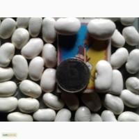 Продам фасоль белую (100 кг)-30 гр