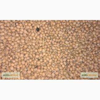 Соя насіння під раундап (Monroe Monsanto, США RR2), соя семена