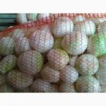 Продам лук(цибулю) очищенный хорошее качество