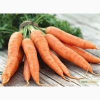 Морковь оптом от производителя