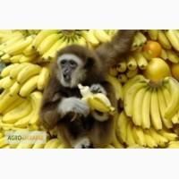 Бананы (сопровождение импортных операций)