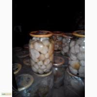 Продам маринований білий гриб