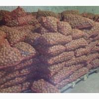 Продажа картофеля для переработки