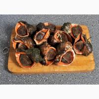 Мясо Рапана