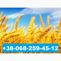 Услуга: Пакетное размещение объявлений на Агро доски Украины