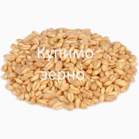 Закуповлюємо на постійній основі пшеницю