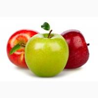 Підприємство закуповує яблуко на переробку