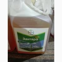 Зантара – системный фунгицид для пшеницы и ячменя