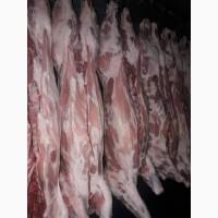 Підприємство реалізує на постійній основі свинину на кості, свинину обрізну