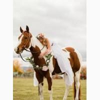 Конные прогулки фотосессии отдых за городом катание на лошадях