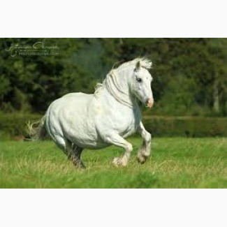 Куплю лошадей на мясо дороже чем бойня