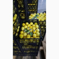 Элизиум лимон