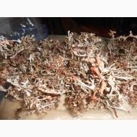 Продам первоцвіт весняний та ісландський мох