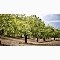 Продам сад грецкого ореха площадью 50га, земля, саженцы ореха, орех