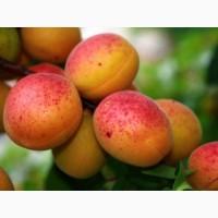 Куплю абрикоси