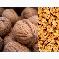 Купим грецкий орех - очищенный и неочищенный