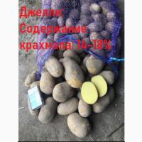 Картошка Оптом