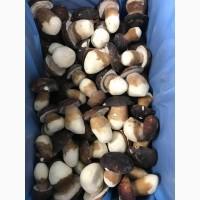 Пропонуємо гриби : морожені, сушені, консервовані