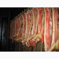 Продам полутуші свинні, бекон