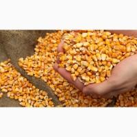 Куплю відходи кукурудзи/пшениці
