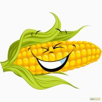 Кукуруза Пионер ПР39Т13