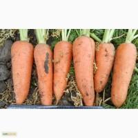 Продам товарную морковь