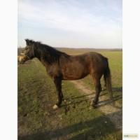 Продається здорова робоча кобила