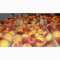 Персик ред- хевен