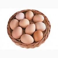 Продам яйця курячі