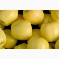 Продам яблука із саду відмінної якості різних сортів