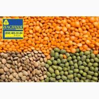 Горох посевной материал семена Баритон и Глянец и Оплот