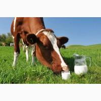 Продам молоко. Об#039;ємом від 20 т