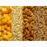Закупаем подсолнечник, кукурузу, горох, зерносмесь