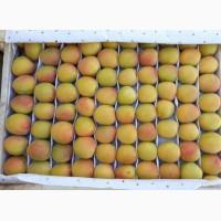 Продам абрикосы, черешня и клубнику из Узбекистана Урожай 2018