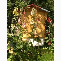 Сон на вуликах, Сон на пчелах