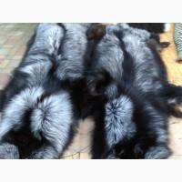 Чорнобурка Silver fox