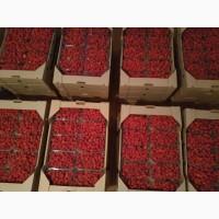 Продам свежую малину 2018, оптом от 200 -2000 кг. Запорожская обл.цена договорная