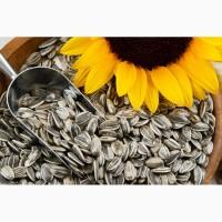 Купить посевные семена подсолнечника Кировоград