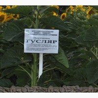 Семена подсолнечника Гусляр F1 (Институт им. В.Я.Юрьева)