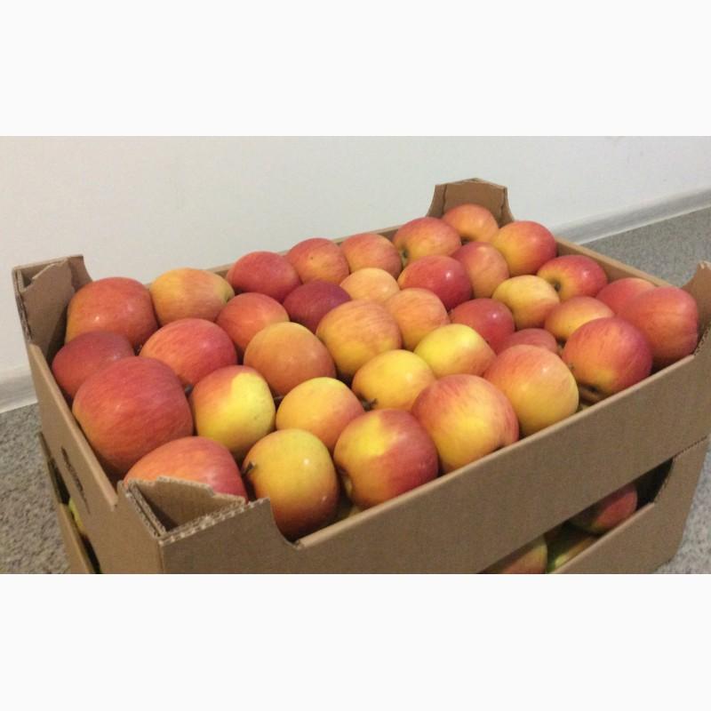 Продам яблука з холодильника, Черновицкая обл.