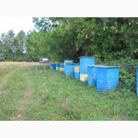 Мёд подсолнечный 2018