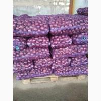 Продам Красный (фиолетовый) лук, розовый Пинг Лонг